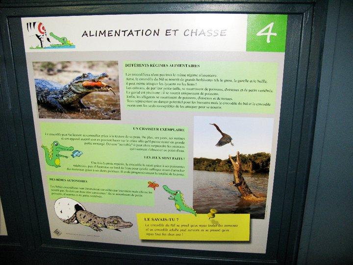 Panneaux crocodiles