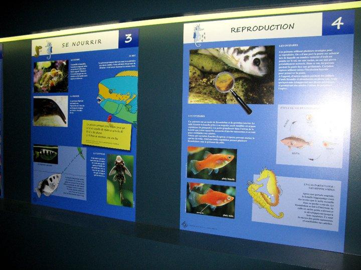 Panneaux poissons