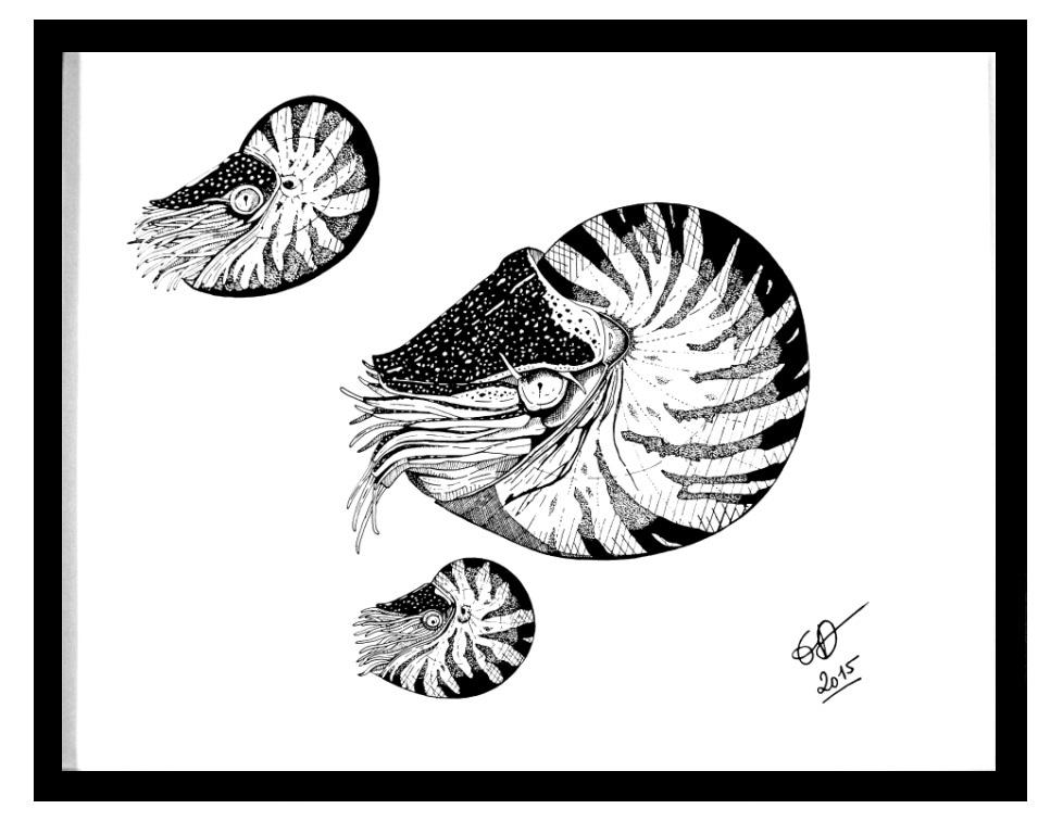 Emilie BIENS - Les nautiles - Acrylique sur toile - 50x60