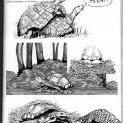 Planche réalisée pour le parc zoologique Village des tortues