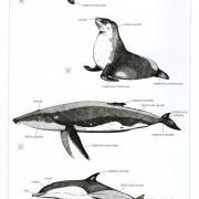 Page illustrée de l'atlas