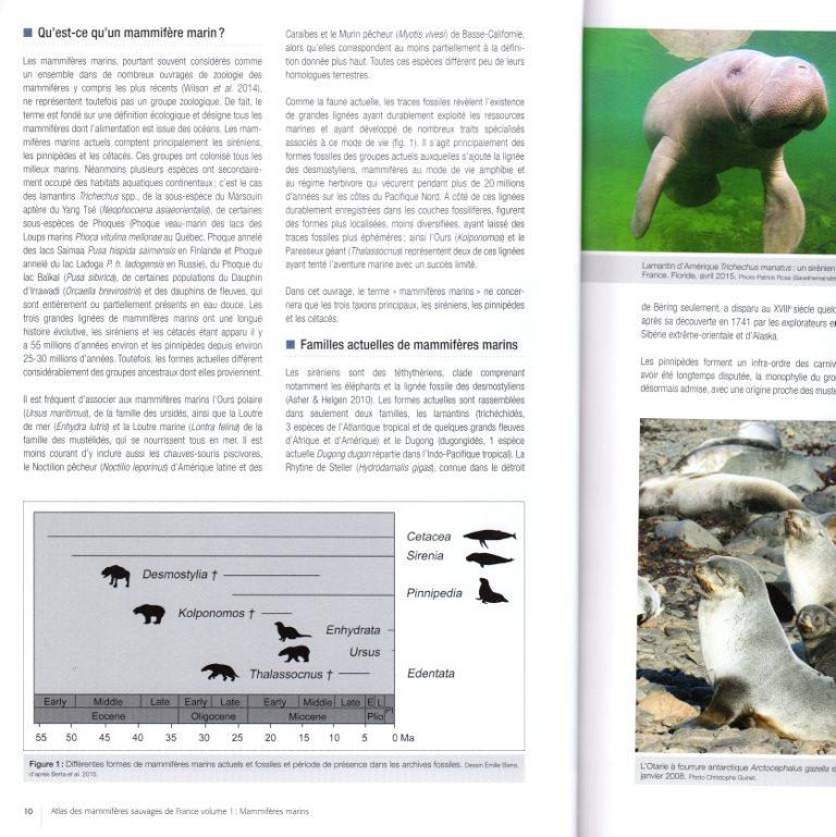 Page illustrée de l'atlas 3 (travail manuel et numérique)