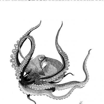Le Kraken ( commande)