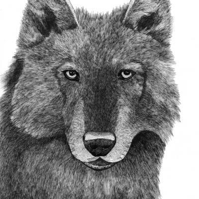 Le Loup (commande)