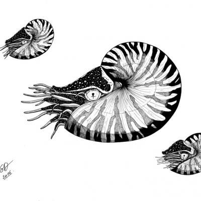 Les nautiles