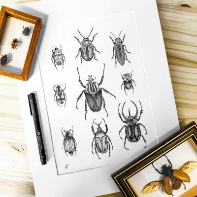 Les scarabées - A4 - Commande - Reproductions bientôt