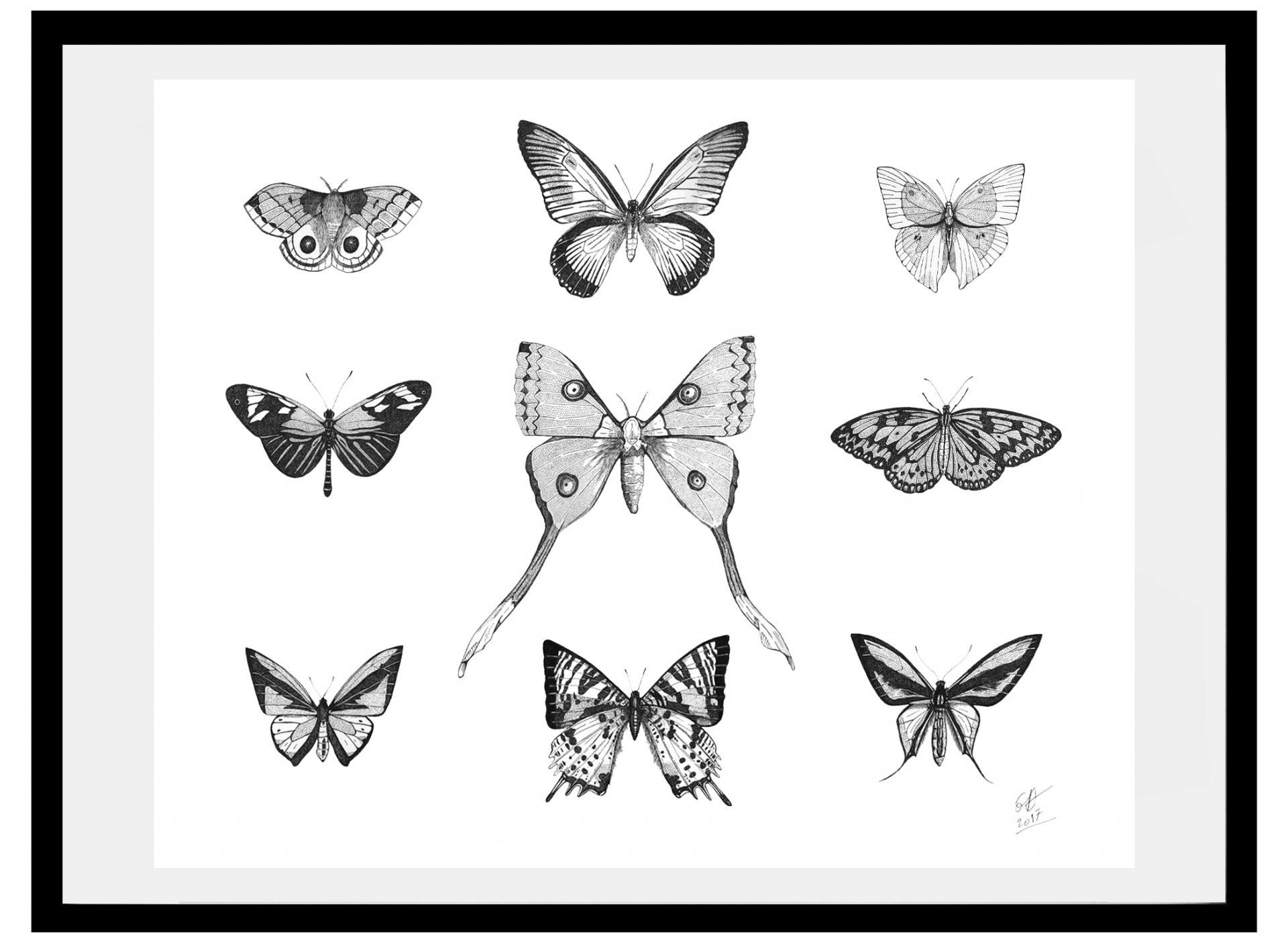 Papillons 56x45 cm