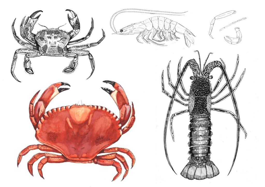 Planche crustaces modifie 1